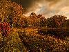 Free Nature Wallpaper : Still Pond Trail