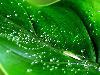 Free Nature Wallpaper : Summer Rain