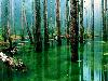 Free Nature Wallpaper : The Bog