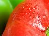 Free Nature Wallpaper : Tomato