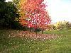 Free Nature Wallpaper : Toronto - Fall