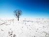 Free Nature Wallpaper : Tree in Snow