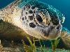 Free Nature Wallpaper : Turtle - Ocean