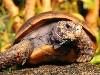Free Nature Wallpaper : Turtle