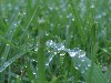 Free Nature Wallpaper : Wet Grass