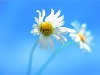 Free Nature Wallpaper : Windows 8 Official Wallpaper - Flowers
