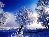 Free Nature Wallpaper : Winter Trees