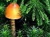 Free Nature Wallpaper : Mushroom