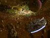 Free Star Wars Wallpaper : Asteroids Ring