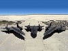 Free Vehicles Wallpaper : Blackbirds